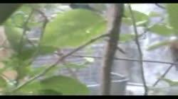 Bangladeshi Peeping Tom 4